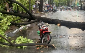 暴風雨致樹倒 兩摩托車駕駛者受傷