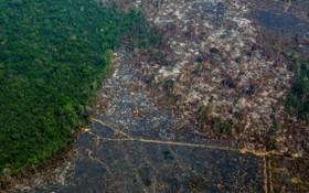 亞馬遜雨林濫伐問題未因冠病大流行減緩,在2020年多達230萬公頃的雨林面積消失。(圖源:Getty Images)
