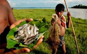 研究論文指出,2017年世界上有72%的人口生活在生物資源不足、低於全球平均收入的國家。(示意圖源:互聯網)