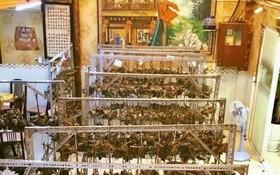 嘉富福建菜館福建肉粽每年都備受食客喜歡。