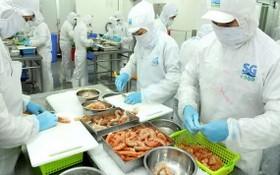 SG Food 公司加工蝦類出口。(圖源:高昇)