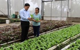 芽皮縣人委會主席趙杜鴻福(左)視察芽皮縣一高新技術無公害農業菜園。(圖源:富才)