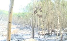 圖為去年5月廣義省金合歡樹林發生火警燒毀了3公頃金合歡樹。(圖源:視頻截圖)