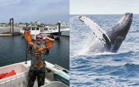 專捕龍蝦的美國漁夫派卡德說,他被吞進一隻座頭鯨的嘴裡,幸而生還。(左圖取自Provincetown Community Space臉書社團facebook.com,右圖取自Unsplash圖庫)