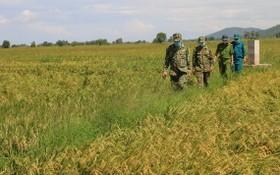 安江省邊防部隊在邊境田野便道上進行巡邏。(圖源:VOV)