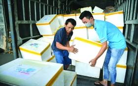 廣平省向本市捐贈3噸魚
