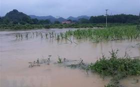 暴風雨引發洪水泛濫,淹沒農民的農作物。(圖源:越通社)