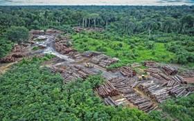 氣候科學研究論文指出,森林砍伐和區域氣候變化可能威脅到亞馬遜雨林大氣中碳的緩衝潛力。(圖源:互聯網)