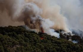 希腊阿哈伊亚林火持续蔓延 致16人入院治疗。(圖源:Global Times)