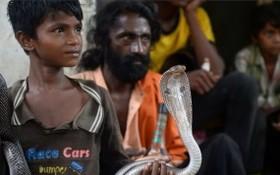 印度眼鏡蛇通常在天黑後攻擊人畜,並引起內出血,需要立即就醫。(圖源:AFP)
