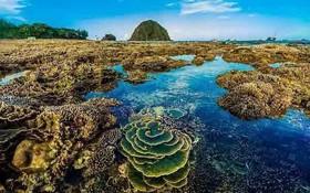 繽紛多彩的天然珊瑚礁。