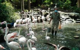 貢草禽園正竭盡全力確保動物的飲食份量和良好地照顧植物。