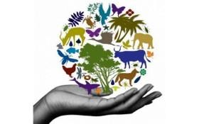 圖為生物多樣性基金宣傳海報。(圖源:互聯網)