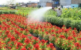 一名沙瀝市農夫在為其種植的花園澆水。(圖源:越通社)