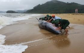 當地民眾致力解救被擱淺的鯨魚。(圖源:秋莊)