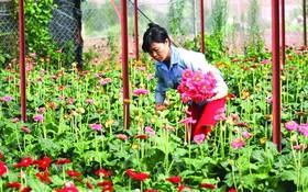 大勒蔬果花卉售價突漲
