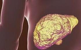 瞭解肝臟5個主要功能