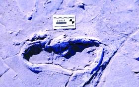 坦桑尼亞Engare Sero的408個古人類足跡之一。
