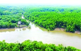 芹耶紅樹林生物圈保護區的總面積逾7萬5000公頃,獲視為全國最大的沿海紅樹林之一。
