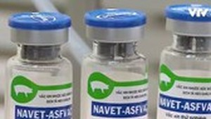 Vietnam to have vaccine against African swine fever