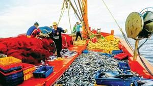 Useful measures in seafood fishing help fishermen in Hoai Nhon Town increase their output. (Photo: SGGP)