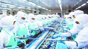 Mekong Delta posts positive results in shrimp exports