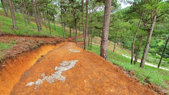 Ngang nhiên làm đường bê tông trong rừng thông Đà Lạt