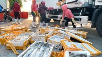 Cá hố bị trả về Cảnh Dương,  bán lại với giá chỉ 5.000 đồng/kg