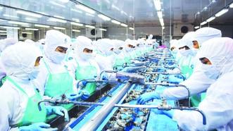 Chế biến tôm xuất khẩu  ở Nhà máy Thủy sản Minh Phú, tỉnh Cà Mau