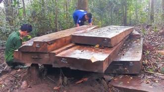 Kỷ luật cảnh cáo Hạt trưởng Hạt kiểm lâm để mất rừng