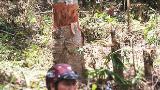 """Phục hồi vụ án """"tham ô"""" ở Ban quản lý rừng phòng hộ Sông Hinh"""