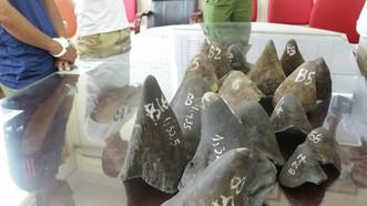 Sừng tê giác bị thu giữ trong một vụ án