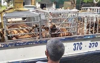 某民戶非法圈養 17 頭老虎