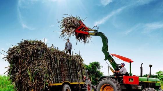 Trong niên vụ 2021-2022, Hiệp hội Mía đường Việt Nam dự kiến diện tích trồng mía sẽ tăng khoảng 10 - 20% so với cùng kỳ và việc mở rộng có thể tiếp tục diễn ra trong những năm tiếp theo do nông dân thu được lợi nhuận từ vụ mía.