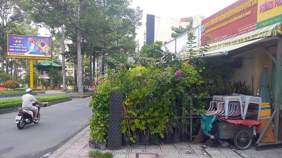 Rào kín vỉa hè để kinh doanh cây cảnh