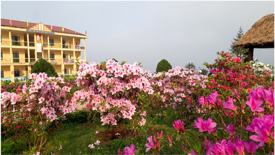"""""""Rhododendron school"""" a tourism hit in Lao Cai"""