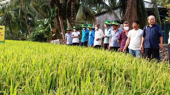 Các chuyên gia của Cty Bình Điền và Trug tâm khuyến nông các tỉnh luôn đồng hành cùng bà con nông dân áp dụng mô hình Canh tác lúa thông minh trong vụ Hè Thu 2021.