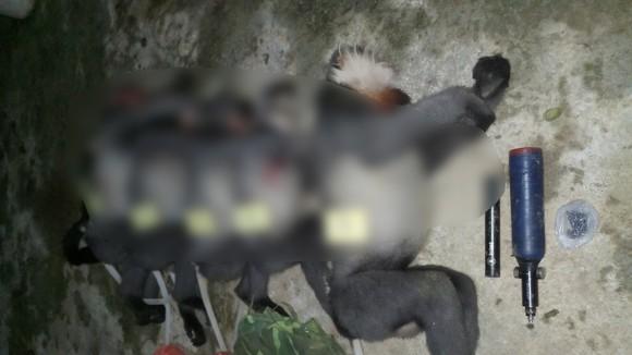Quảng Ngãi: Phát hiện 5 cá thể Voọc chà vá chân xám bị bắn chết