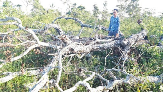 Một vụ phá rừng tại khu vực Cheng Leng, xã Hbông