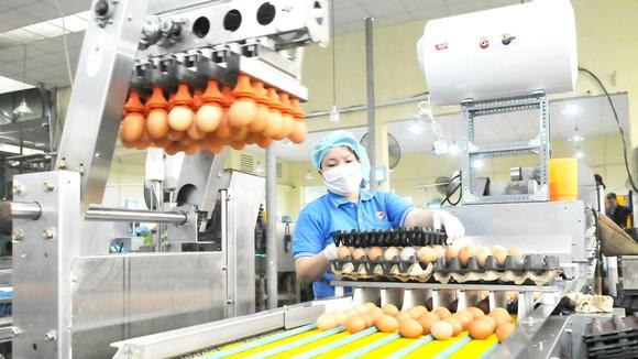 Sử dụng robot trong chế biến trứng gia cầm tại Công ty Vĩnh Thành Đạt. Ảnh: CAO THĂNG