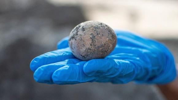 Quả trứng gà 1.000 năm tuổi. Nguồn: Cơ quan Cổ vật Israel