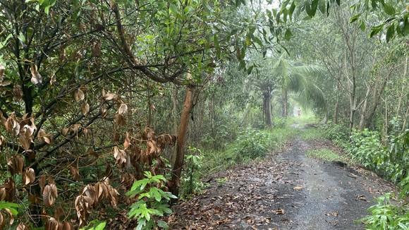 Đường vào dự án Khu dân cư dịch vụ theo quy hoạch tại xã An Phước, huyện Long Thành, tỉnh Đồng Nai