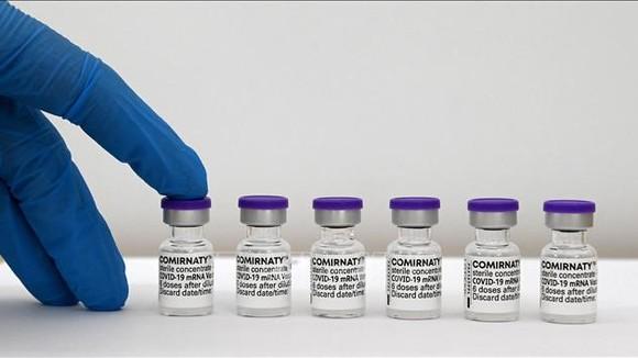 Vaccine ngừa Covid-19 của Pfizer-BioNTech. Ảnh: AFP/TTXVN