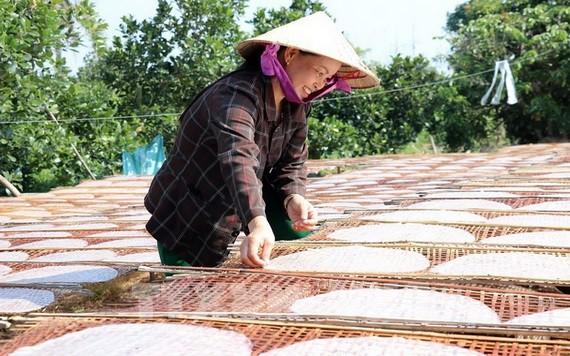 米紙曬乾工段。(圖源:越通社)