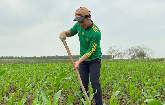 春王在疫情期間回鄉幹農活。