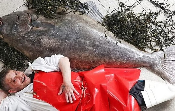 巨型比目魚身長與一位成年人不遑多讓。(圖源:互聯網)