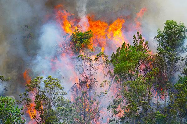 Miền Trung: Cảnh báo cháy rừng mức rất nguy hiểm