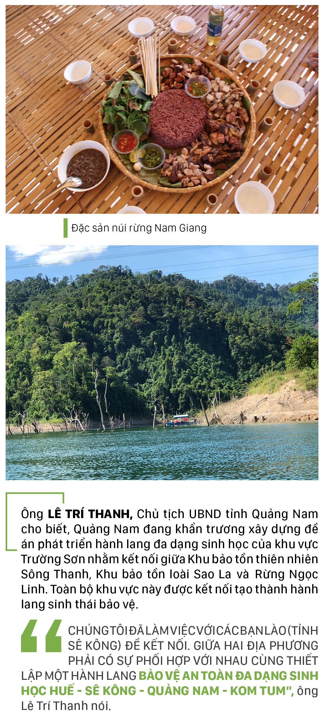 Nỗ lực giữ rừng Sông Thanh ảnh 13