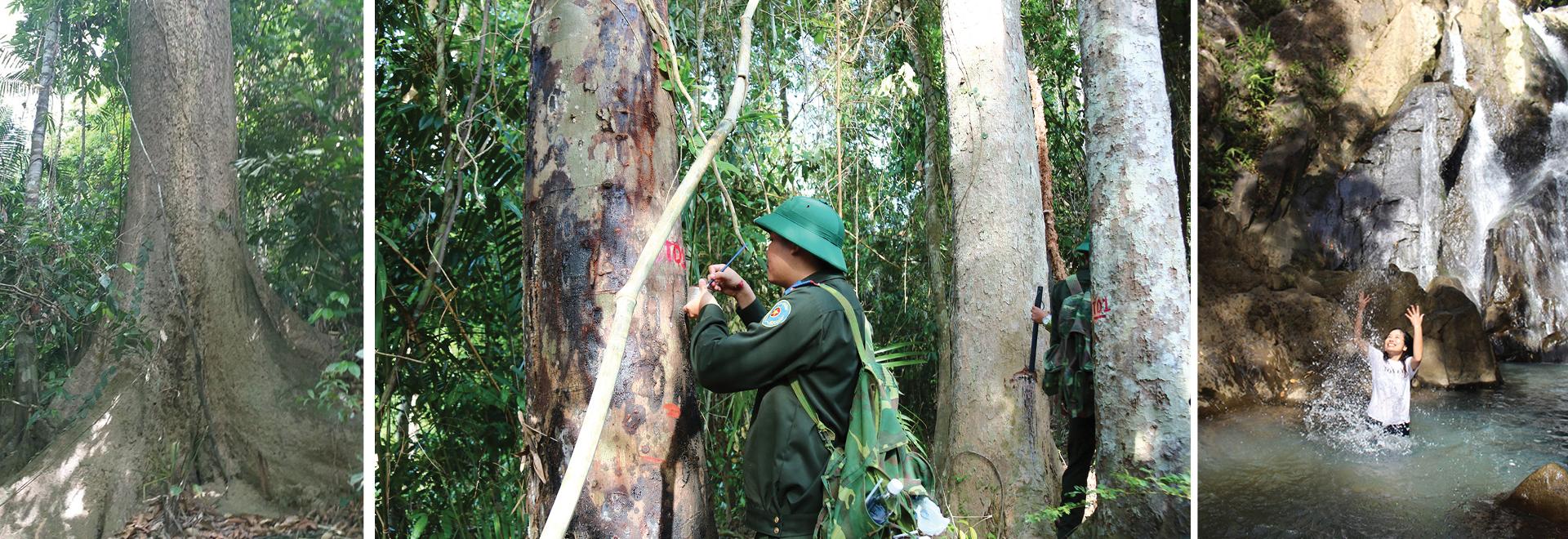 Nỗ lực giữ rừng Sông Thanh ảnh 2