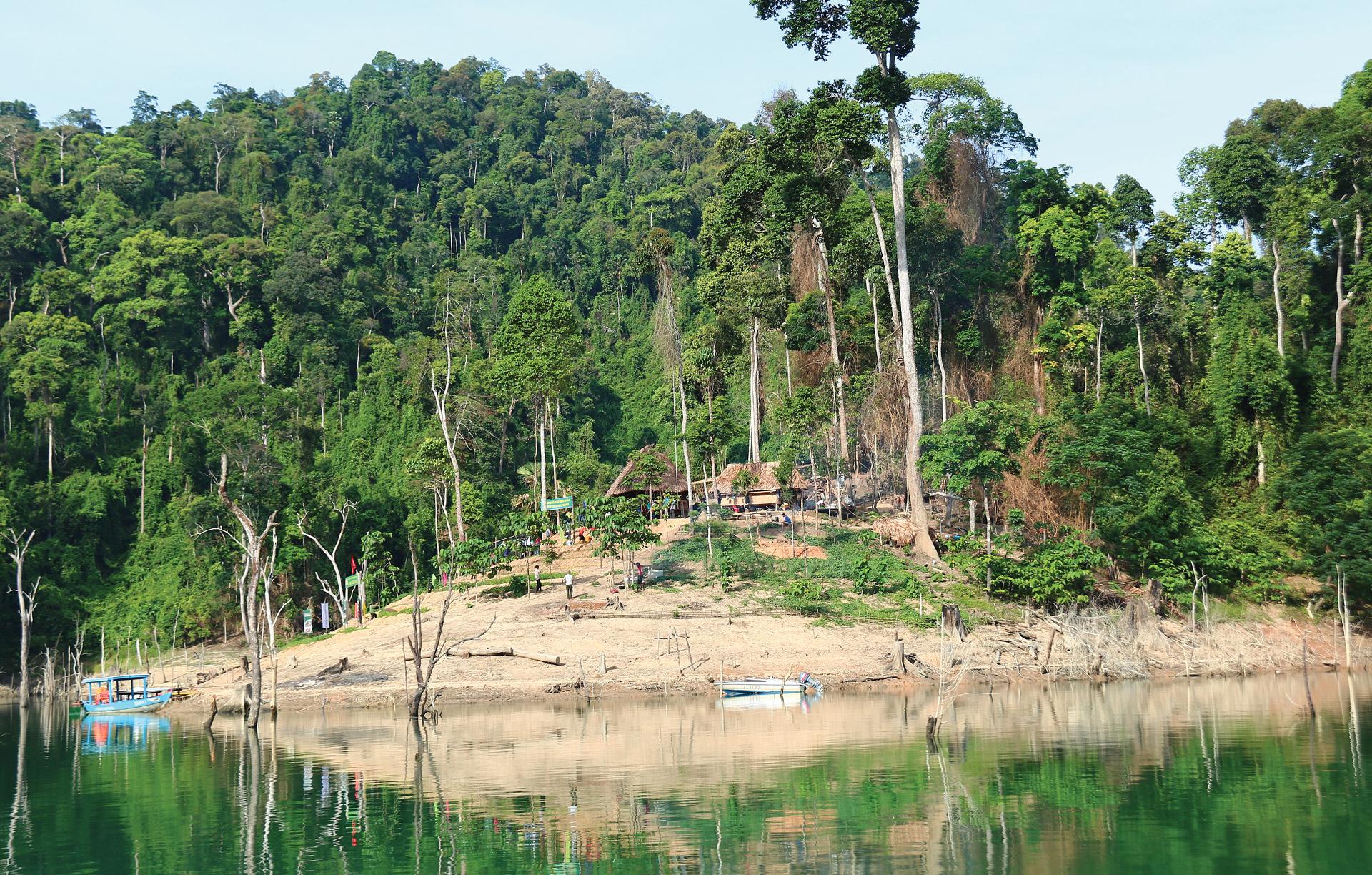 Nỗ lực giữ rừng Sông Thanh ảnh 4